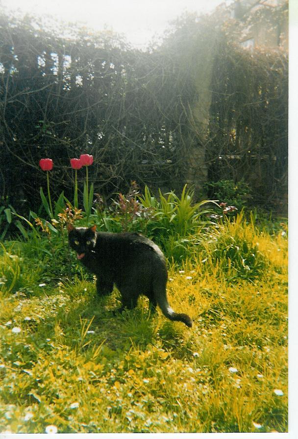 Bohous in garden