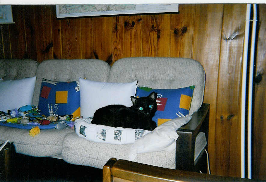 Bohous in his Irish bed