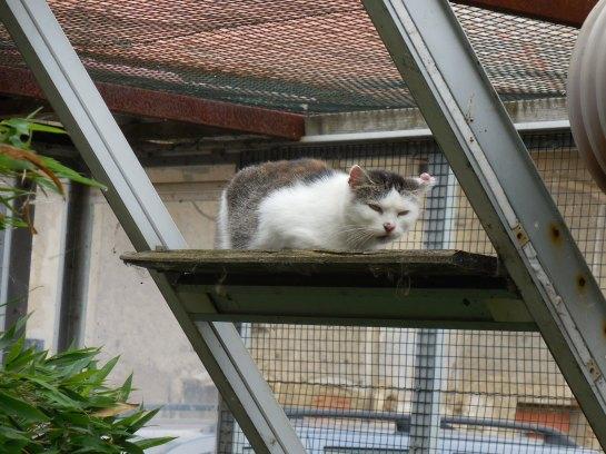 Cernivcats11
