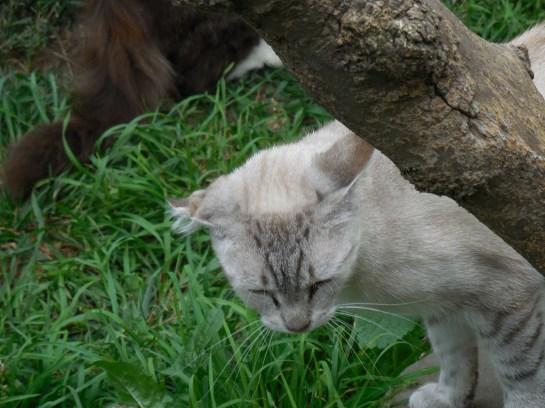 Cernivcats12