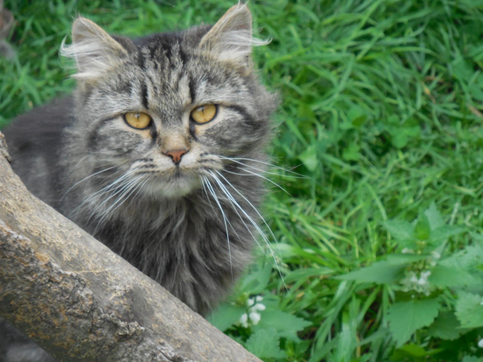 Cernivcats14