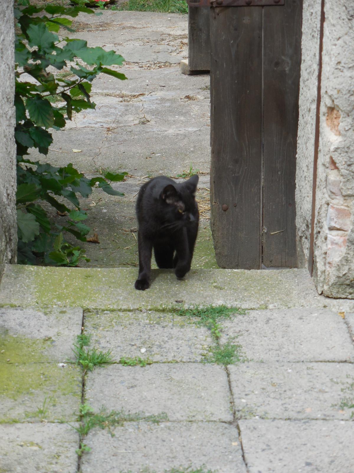 Cernivcats4black